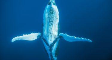 Im Bann der Wale