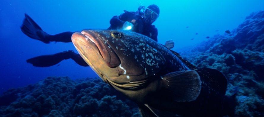 Sightseeing unter Wasser