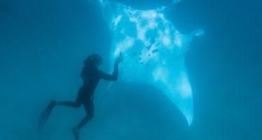 Berührende Unterwasserbegegnung in Westaustralien