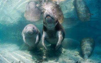 Tarzans Schatz und die Heimat der Meerjungfrauen