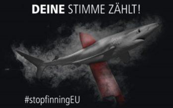 Bürgerinitiative zum Verbot des Handels mit Haiflossen in Europa gestartet