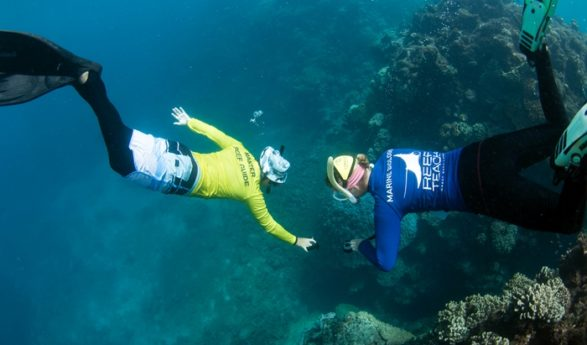 Können wir das Riff noch retten? Yes, we can!