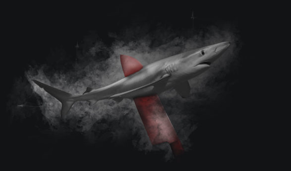 100.000 Stimmen gegen den Handel mit Haiflossen