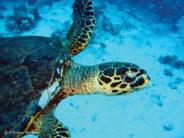 Wracks, Mondfische und Korallen – die schönsten Tauchspots in El Gouna