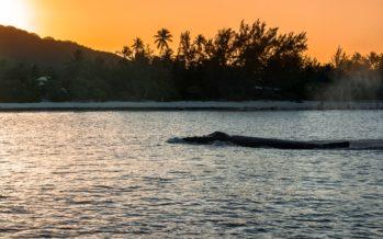 Die Insel der Wale – Rurutu
