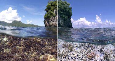 Erste virtuelle Weltkorallenriffkonferenz: Schutz der Riffe von globaler Bedeutung
